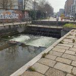 Anatroccoli in pericolo nel Naviglio Martesana, salvi grazie a ENPA Milano